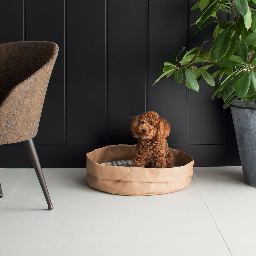 New Trends in Dog Beds and Cats